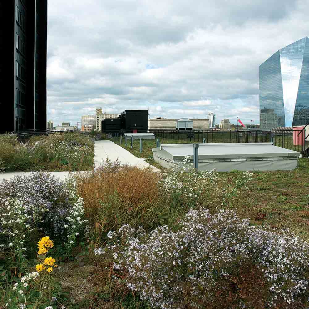 "A ""green roof"" is among infrastructure projects in Philadelphia designed to decrease stormwater runoff."